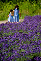 summer vacation (takay) Tags: summer vacation flower japan landscape purple sister lavender gunma beautifulscenery   tanbara takay
