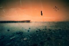 Dream (Khaled A.K) Tags: sea seascape bird birds photography pier rocks sa jeddah saudiarabia khaled ksa saudia aplusphoto kashkari goldenvisions