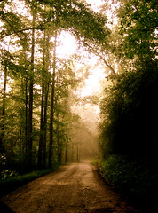 the path. (milla.deet) Tags: road trees sky sun mist lake tree path walk rabun lakerabun