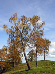 Trees on a hill (Steffe) Tags: snörom jordbro hill trees fall autumn haninge sweden canon fallfoliage höst gård torp