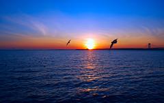 Sunset (jami_lee) Tags: ocean bridge blue sunset sky sun beach beautiful birds silhouette thechallengefactory