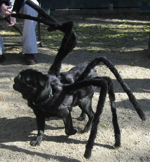 Spider-Dog costume dog