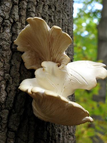 Bird Mushroom Underside