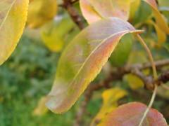 Leaf (Elanorya) Tags: verde natura foglia albero ramo autunno colori