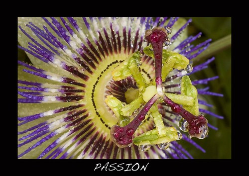 Passion Print