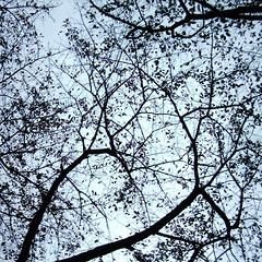 Tree (MiniDigi)