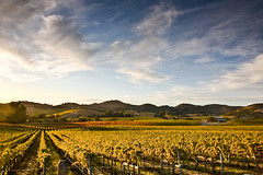 Fall Afternoon Vineyard (Tom Moyer Photography) Tags: california sky fall clouds barn vineyard hills sonomacounty canon5d winecountry lightroom carneros