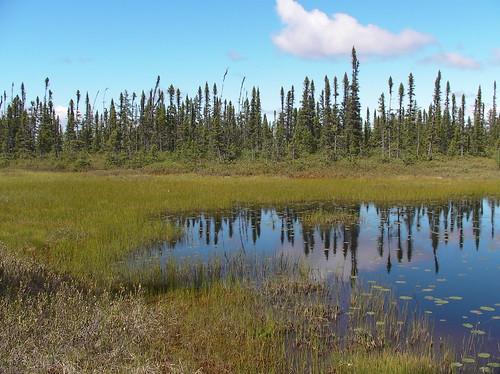 Tourbière/ Peat bog