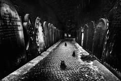 Pathway to Hell (chippyrob) Tags: cats monochrome liverpool mono blackwhite d200 gravestones dapa robertpowell dapagroup dapagroupmeritaward chippyrob dapagroupmeritaward3 dapagroupmeritaward5 dapagroupmeritaward4 dapagroupmeritaward2