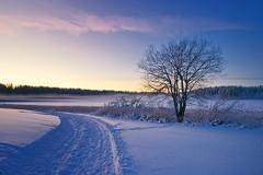 Nordbytjernet - Desember 2008 (Krogen) Tags: winter norway landscape norge vinter december norwegen noruega scandinavia akershus desember romerike krogen landskap noorwegen noreg ullensaker skandinavia nordbytjernet olympuse3 zuikodigital918mm