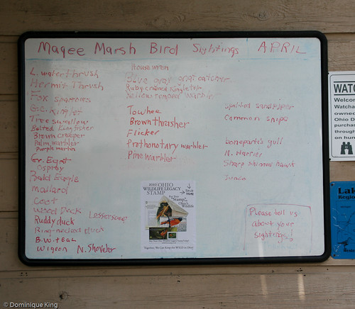 Magee Marsh, Ohio wildlife refuge-9
