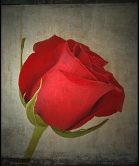moment in time (Spybee(gone for awhile)) Tags: red flower macro texture rose rosebud vintaged superbmasterpiece megashot goldstaraward photoexplore explorewinnersoftheworld floralfavorites showmeyourqualitypixels