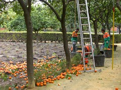 Sville, Real Alcazar, jardins (mhp75) Tags: espagne sville andalousie