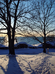 (Sameli) Tags: trees winter sunset sea sun snow cold tree set suomi finland helsinki shadows