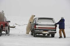 Polar Bear 4.JPG