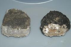DSCN0256 (David J. Thomas) Tags: limestone microbiology speleology rockflour