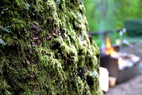 Moss + Campfire