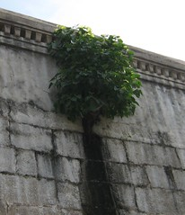 Maintenane of the great HR&CE - Plants in the walls