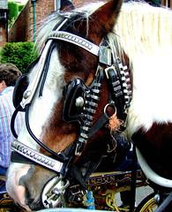 Appleby Horse Fair 2008 (55) (allybeag) Tags: horse brown white metal head decoration harness bit appleby blinker horsefair