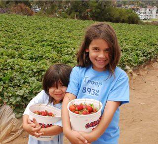 Buckets full of strawberries