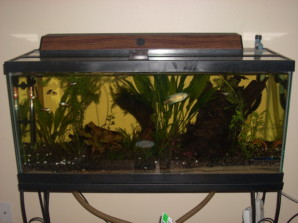 The whole tank