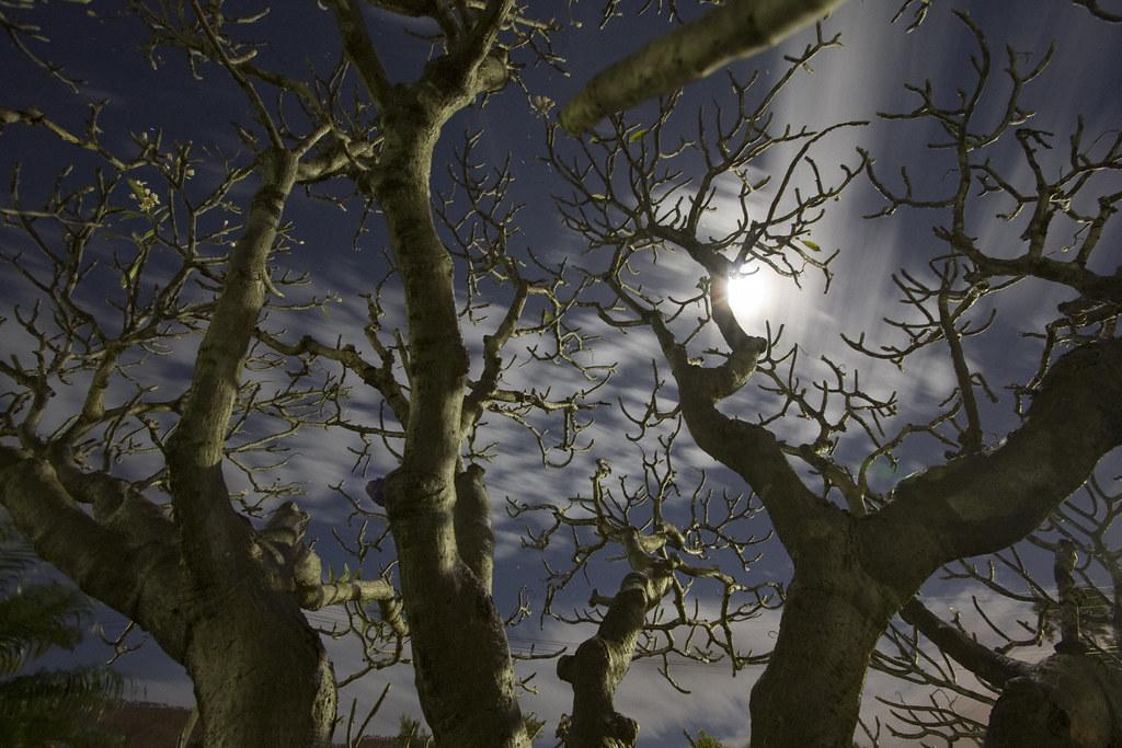 Spooky Frangipani