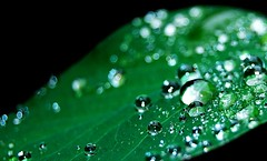 Shimmer & Drops (nEoPOL) Tags: light plant color colour green nature water field dark droplets leaf nikon dof heart award drop droplet depth breathtaking gr8 neopol d40 of mywinners platinumheartaward