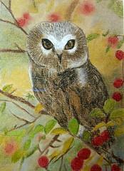 Saw Whet Owl (BarstowMOM) Tags: birds drawing pastel pastels owls wildanimals