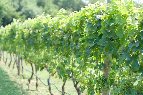 199/365 Vineyard