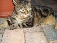 confused (nasharz) Tags: cat catnipaddicts