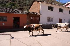 PERU2008BEGIN 220 (zoomcharlieb) Tags: peru cachora peruvianimages