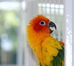 For My Sunny Girl (daisybaxter) Tags: sun little parrot richard conure
