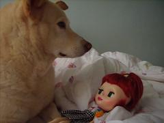 Ah! não olhe para mim com estes olhôes, eu sou só um cachorro!