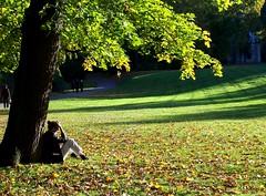 Den Herbst genieen (happycat) Tags: park tree germany weimar thringen leaf we blatt baum singletree poeple mensch ilmpark einzelbaum parkanderilm