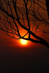 The Naked Tree II (Firdaus Mahadi) Tags: sunset branch silhouettes deadtree oldtree inspiredbylove flickrsbest beautifulexpression nikkor70300vr seasunclouds nikonflickraward panoramafotogrfico