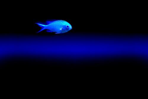BLUE S NOTE flat