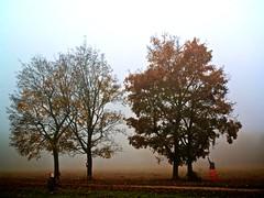 Day38 Year2 (Tanzbar) Tags: autumn mist tree fall fog nebel herbst clones year2 clone baum geister dayshot gosts 365days baume 365tage 365more