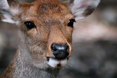 , Nara (bryan...) Tags: film japan canon fuji venus superia 400  fujifilm nara animalplanet eos50  fujicolor canoneos50
