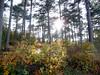 Il bosco a monte Grisa