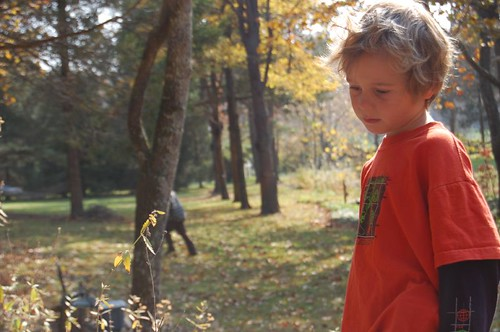 boy in fall