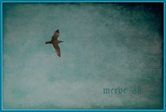 Simurg'a Doğru... / To the Eternal Life by me®ve