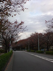 Tamagawa Ride (JEC81) Tags: road cycling tamagawa