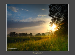 Foggy Sunrise (profiphotos) Tags: trees light nature beauty field fog clouds germany effects landscapes focus gallery cities places website elements lensflare dreamy sunrises emotions potofgold preset berndorf lightroom2