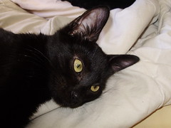 ojos de gatita (Javy DD) Tags: linda gatita