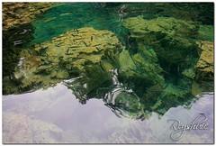 Kayangan Lake (reyshuie) Tags: bees philippines snorkeling zebra giraffe mangroves coron porcupine corals palawan bearcat calamiandeer busuanga calauit limestonecliffs mttapyas aquashoes kayanganlake twinlagoon sietepecados barracudalake seadive skeletonwreck cycisland maquinithotspring villagelodge calomboyanisland