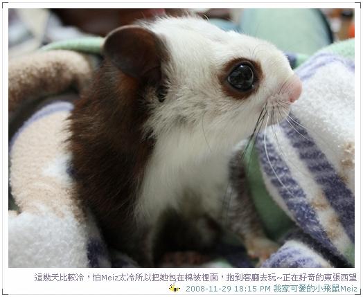 2008年11~12月份小飛鼠Meiz的生活照 (5)