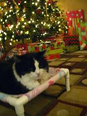 Josie testing the pink cat hammock