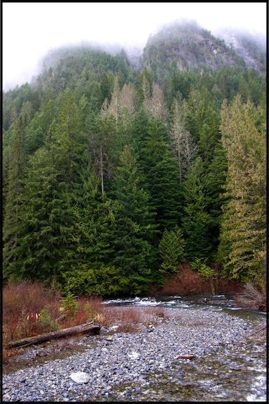río+bosque