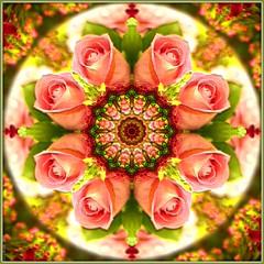 Kaleidoscope Rose (San Valentín Classic) 3109-1