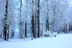 Trees-1 (HeathMcConnell) Tags: trees snow ice landscape photography watermarked 1x15